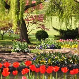 Parco Giardino Sigurtá: the blooming tulips