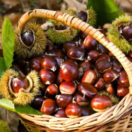 Cheers to the chestnuts!