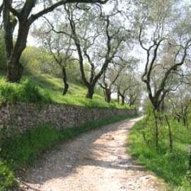 Hiking around Lake Garda